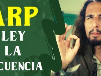 LARP La Ley de la consecuencia Rol en vivo en España